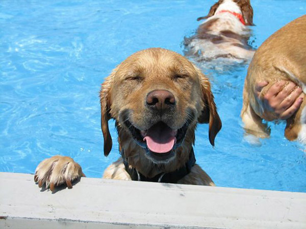 dog-pools-swimming-pools
