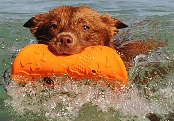 water and dog toy