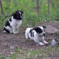 puppies-of-chernobyl-380