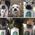 starbucks shelter dogs 380