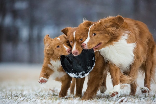 top dog photos of the year 2018