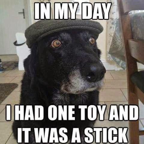 dog memes on ripley the dog