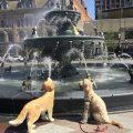 dog fountain 380