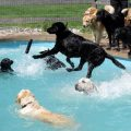 doggie pool party 380